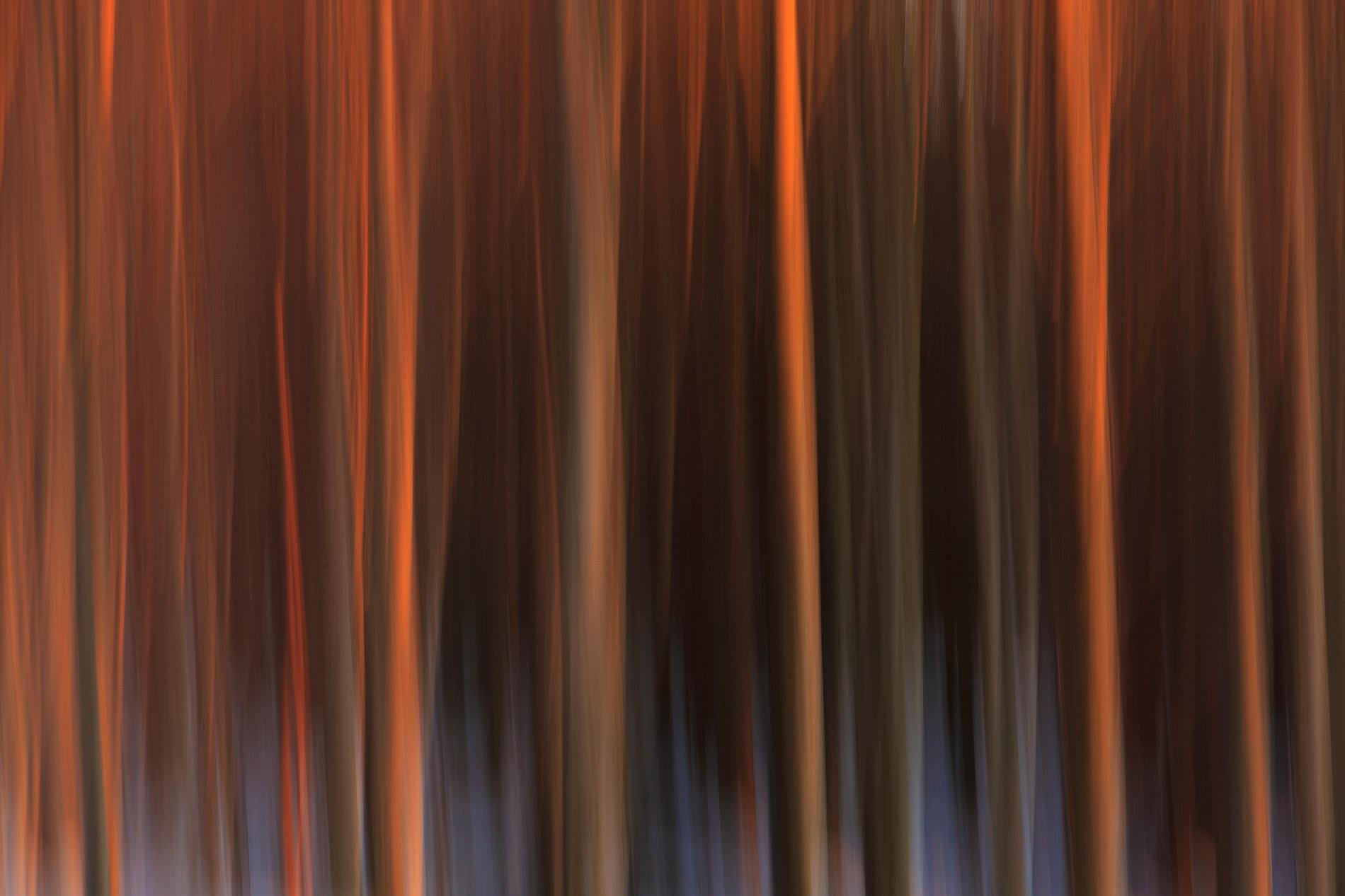 verwischter Wald