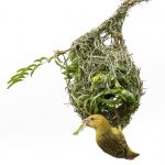 6 Platz Vögel- GDT Naturfotograf des Jahres